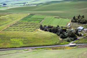 Aerial view of the Boyd farm, with test plots visible on the left. Photo: Washington State University.