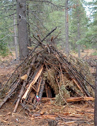 Researchers are developing methods of converting wood waste, like this slash pile, into fuels.