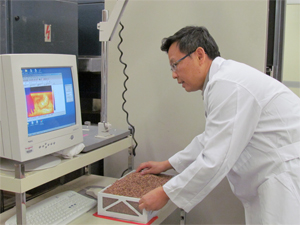 Washington State University Food Engineer Juming Tang examines a thermal image of a sample of lentils treated with radio frequency energy for insect pest control.