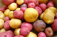 Baby spuds pack a powerull nutrional punch, research shows.