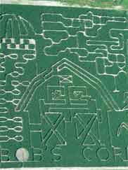 Amazing corn mazes at Bob's Corn. Learning to build corn mazes from a maze master.