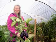 Alm Hill Gardens farmer Gretchen Hoyt extends her eggplant's season in a hoophouse.