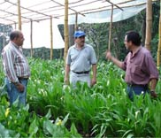 Pass it on: experienced farmers share knowledge with newcomers to the field. Photo curtesy USDA.