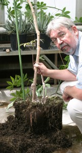 WSU Professor John Fellman is part of an international research team funded by the Gates Foundation to study the nutritional value and shelf-life of cassava. Photo taken in a WSU greenhouse located in Pullman, where the cassava is being raised specifically for this research.