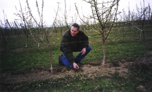 John Reganold examines soil in a commercial organic orchard.