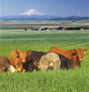 Agriculture, a top priority in Washington, continues to innovate thanks to funding from the state legislature.