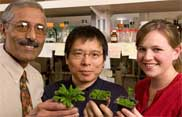 Joe Pooviah, left, Liqun Du and Kayla Ann Simons with some of the plants that have been the focus of their research on disease resistance. Photo by Robert Hubner, WSU Photo Services.