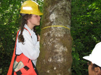 A member of the SYFI team collections information to measure the diameter of a tree.