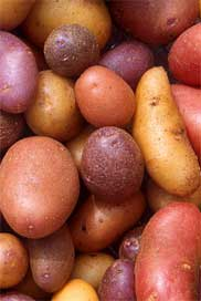 For more information on potato variety development and research at WSU, please visit potatoes.wsu.edu.