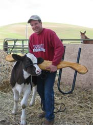 Eric Zakarison putting training yoke on Babe, a three-month-old ox calf.