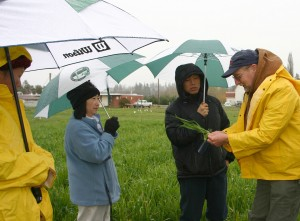 Craig Cogger (right) discusses cover crops with participants at a field day for Hmong farmers at the WSU Puyallup Research and Extension Center.
