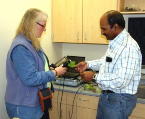 Eileen Perry, assistant director of WSU's Center for Precision Agricultural Systems and Naidu Rayapati, WSU grape virologist, use a spectral radiometer to measure light reflected from grape leaves. (WSU Photo)