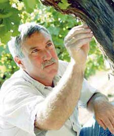 Doug Walsh examines a grape vine for signs of insect damage.