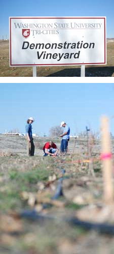 Undergraduate Jason Stout and graduate student James St. Clair (bottom; left to right) learn the ropes of vineyard site selection and layout from assistant professor Bhaskar Bondada at the new Demonstration Vineyard on the WSU Tri-Cities campus.