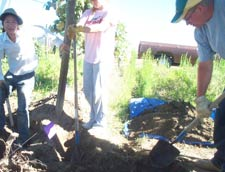 "Excavating a Concord grape vine; L-R: Suphasuk ""Bird"" Pradubsuck , Kami Laffey and doctoral student Kyle Bair."