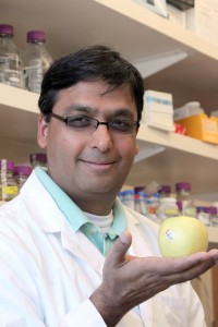 Horticultural genomicist Amit Dhingra holds a Golden Delicious apple. Photo by Brian Charles Clark/WSU.