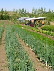 Tukey Farm is one of the teaching sites for WSU's pathbreaking program in organic agriculture.