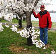 Bill Howell stands next to one of the Usuzumi cherry trees clean of viruses by a predecessor of NCPN-FT.