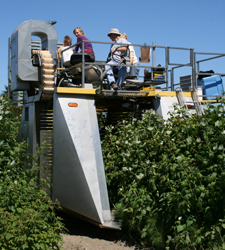 A harvesting we will go. Managing raspberries changes with new berry varieties, new herbicides, and new harvesting machines. Scientists at WSU's Northwestern Washington Research and Extension Center at Mount Vernon are on top of things.