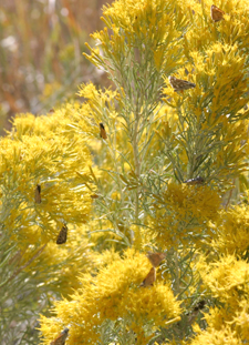 Native plant species, like this one, attract specific insects.