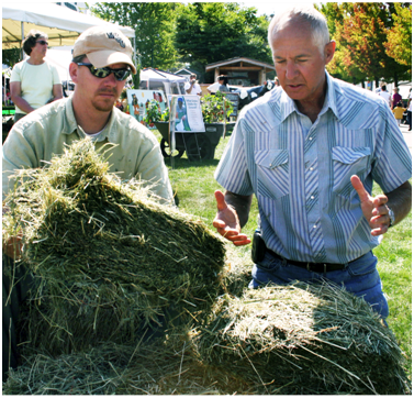 Forage expert Steve Fransen (right) explains the fine points of judging quality hay to Andrew Corbin during hay juding at the Evergreen Fair. Photo: Kate Halstead, WSU Snohomish County Extension.