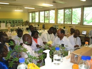 Rayapati conducting a workshop for African scientists on diagnosis of cassava mosaic disease at the International Institute of Tropical Agriculture (IITA), Nigeria, in collaboration with Dr. P. Lava Kumar, virologist at IITA, to transfer technologies generated in Rayapati's lab at WSU-IAREC.