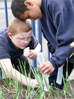 Devin Drennen (left with glasses) and Vincent Fefe measure plants growing in a garden at Edison Elementary School in Tacoma, Wash.