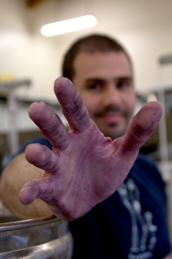 Federico Cassasa extends his phenolically enhanced hand. The day we talked, he had been busy crushing red wine grapes. For a few days or weeks each fall, winemakers walk around with purple hands.