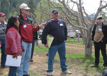 Orchardist Dennis Nicholson (in blue sweatshirt) describes his organic tree fruit production system