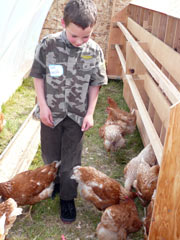 Tom Koenig, 6, of Ethel in Lewis County walking amongst chickens near nesting boxes