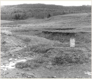 Riparian conditions on West Muddy Creek, Wyoming, in 1954 following season-long grazing.