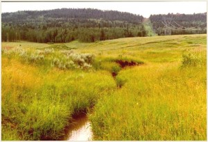 Riparian conditions on West Muddy Creek, Wyoming, in 1998 following a change to short-term grazing with a longer recovery period. Click image for larger version.