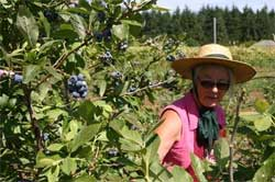 Alm Hill Gardens owner Gretchen Hoyt among the blueberries
