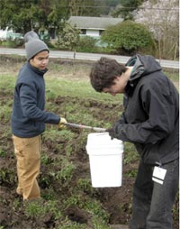 Soil sampling of weeds seed for organic farming research at Little Eorthe Farm, Puyallup