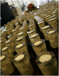 Bottles of freshly filled and corked Frost Cider line up for labels during a late fall visit to Tieton Cider Works near Yakima. Photo by Kate Halstead (hi-res version available)