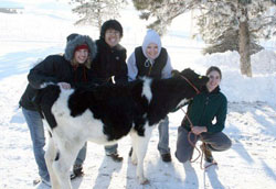 Dairy Club students hanging out with one of humanity's oldest friends--a cow.