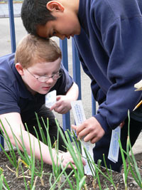 Devin Drennen (left with glasses) and Vincent Fefe measure plants growing in a garden at Edison Elementary School in Tacoma, Wash. The school participates in WSU Extension's Food $ense, a nutrition education program for children and families with limited incomes.
