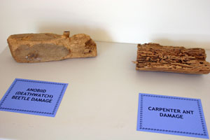 a display showing examples of what some of the bugs that this facility might attract can do to a perfectly good piece of wood.
