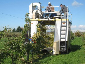 This harvester has the potential to lower the cost of picking cider apples, making Washington's hard cider industry more competitive. Click image to download high-resolution version.