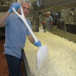 Nial Yager at work making cheese at the WSU Creamery. Photo courtesy WSU.