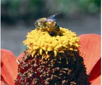 Learn beekeeping from masters. Photo: Kate Halstead/WSU Extension.