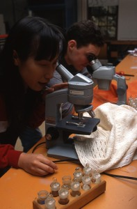 Looking into microscopes