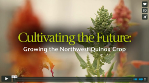 Watch as Kevin Murphy delivers a message about quinoa in the United States and around the world. Video by Cougar Studios.