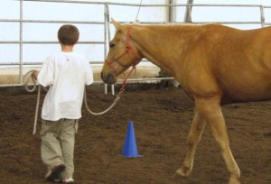 A child leads a horse during a 12-week equine-assisted learning program proven to reduce stress in kids. Photo by Patricia Pendry.