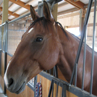 Pokey, a big, loveable Quarter horse gelding, is one of the equines in the PATH program.