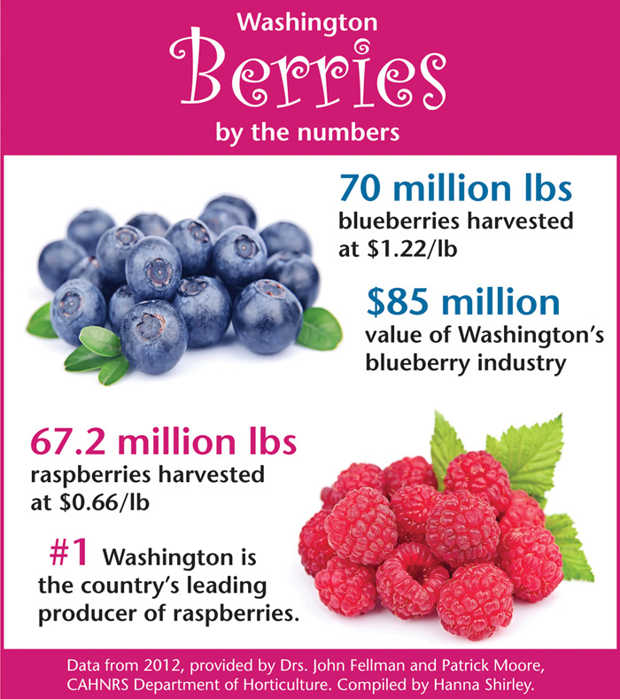 Berries by the Numbers