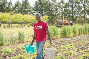 Graduate student Cedric Habiyaremye of Rwanda, who first saw and tasted quinoa less than a year ago, is test-growing it at WSU's Organic Farm. (Photo by Robert Hubner, WSU Photo Services)