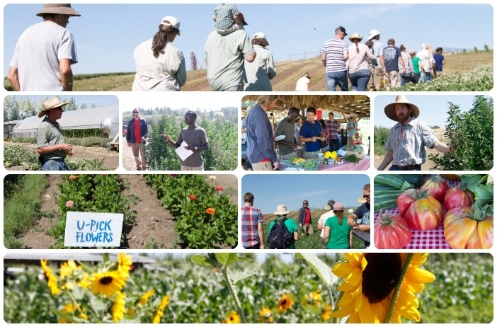 (Left to right, top to bottom.) Walking through buckwheat fields at the WSU Eggert Family Organic Farm. Farm manager Brad Jaeckel talks about a successful year for artichokes on the farm, graduate student, Cedric, provides the highlights from his quinoa and tubers research, munching on fresh fruits and veggies before the tour; researcher and leader of WSU's organic breeding program, Kevin Murphy stands next to the spry quinoa plants; u-pick flowers blossoming; Chris, a graduate student, talks about the different varieties of buckwheat growing on the farm; heirloom tomatoes. Organic Farm Field Day participants were able to take home a sunflower souvenir. Photos by Rachel Webber.