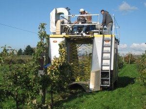 Over-the-row small fruit harvester passing over cider apple trees at WSU in Mt. Vernon. Photo by Carol Miles, WSU.