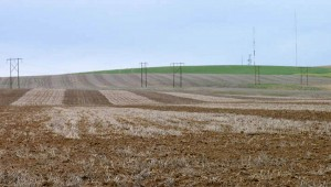 Alternating strips of undercutter tillage fallow and traditional tillage fallow in the eastern Horse Heaven Hills in 2009.